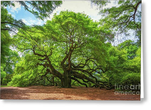 Angel Oak Tree In South Carolina  Greeting Card