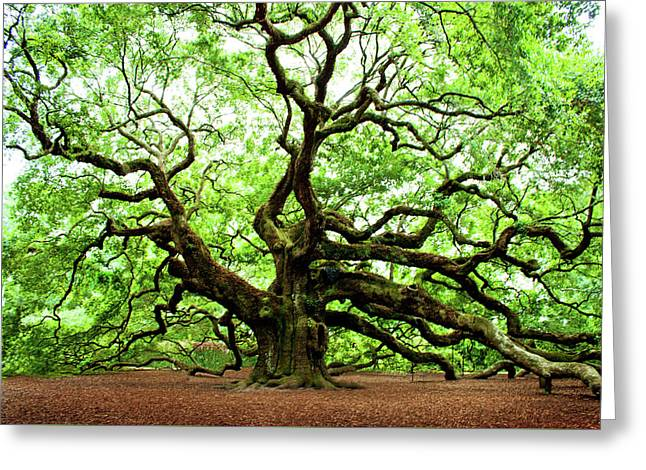 Angel Oak Tree Greeting Card by Jean Haynes
