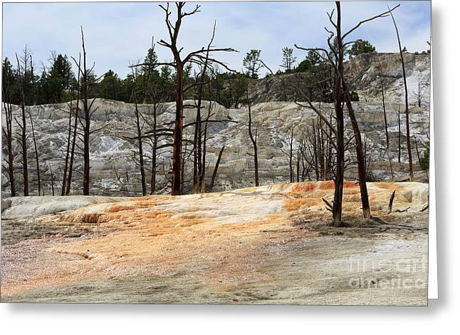 Angel Terrace At Mammoth Hot Springs Yellowstone National Park Greeting Card by Louise Heusinkveld