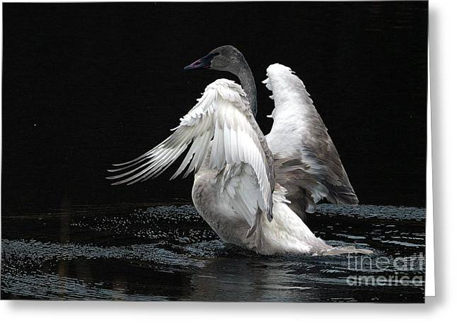 Angel Wings 2 Greeting Card by Sharon Talson