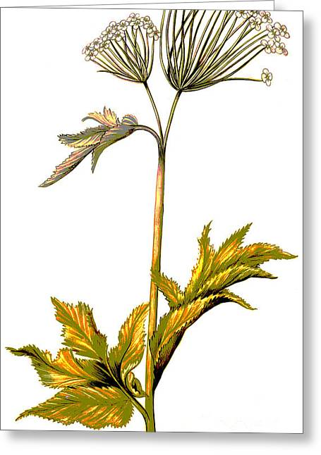 Angelica Greeting Card by Nicolas Robert