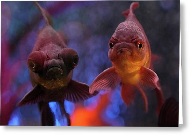 Angry Goldfish Greeting Card