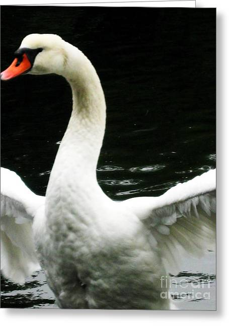 Angry Swan Greeting Card by Maria Scarfone
