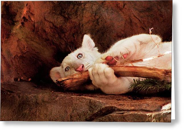 Animal - Cat - My Chew Toy Greeting Card by Mike Savad