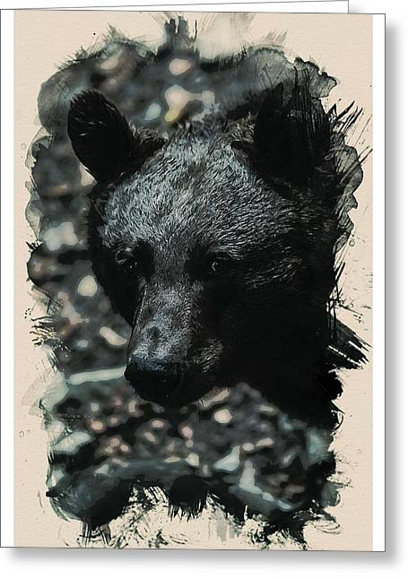Animal Kingdom Series - Black Bear Greeting Card