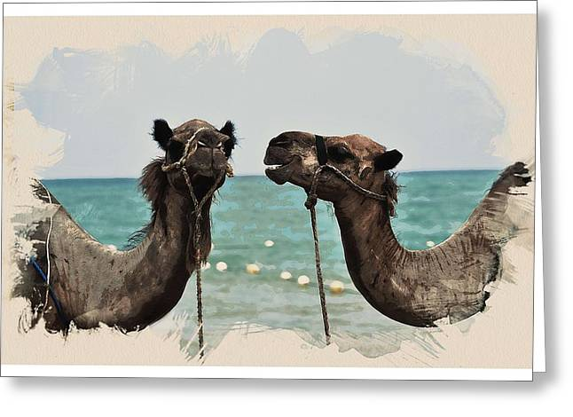 Animal Kingdom Series - Camels Greeting Card