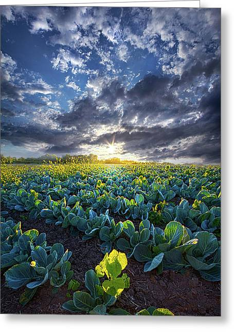 Ankle High In July Greeting Card by Phil Koch