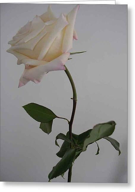 Anna Rose Greeting Card by Nancy Ferrier