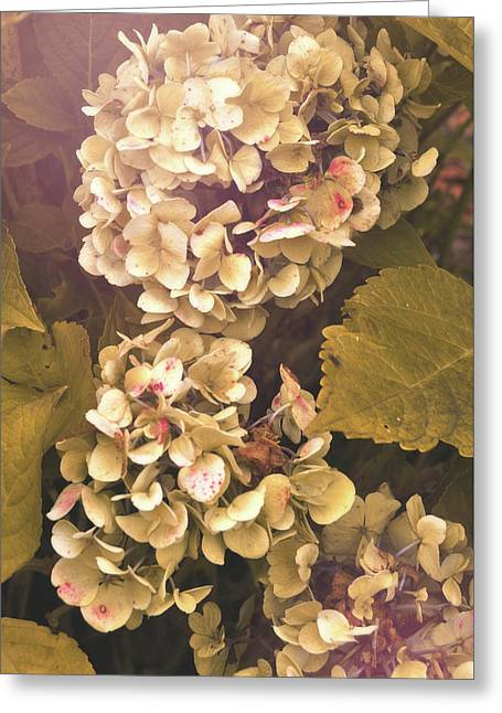 Annabelle Greeting Card by JAMART Photography