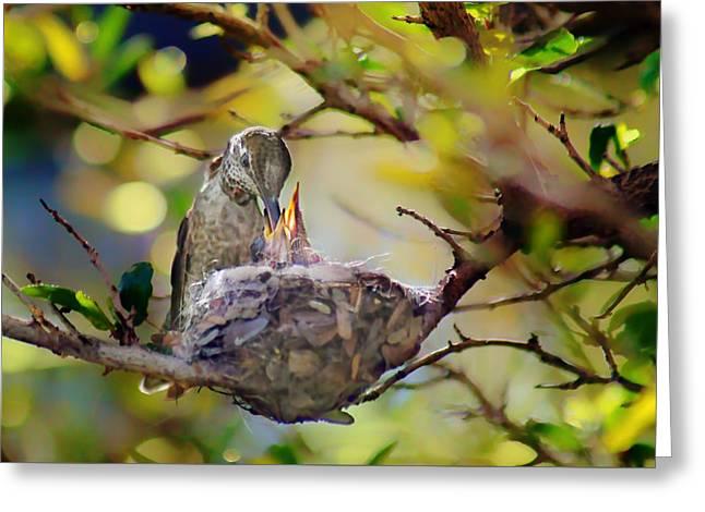 Anna's Hummingbirds 2 - Nest Greeting Card