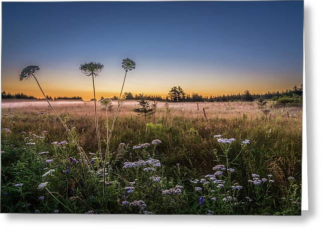Greeting Card featuring the photograph Anne's Lace On Misty Cavendish Meadows by Chris Bordeleau