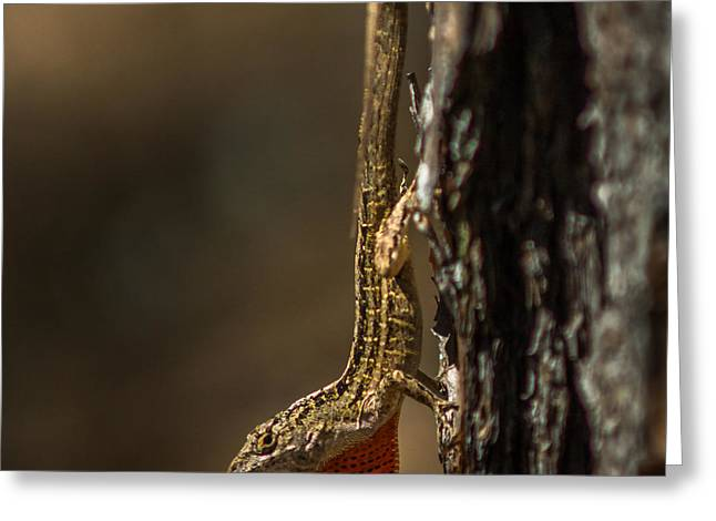 Anole Basking On A Tree Greeting Card by Chris Bordeleau