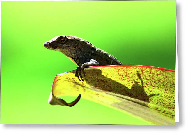 Anole In Green Greeting Card