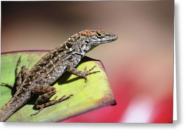 Anole In Rose Greeting Card