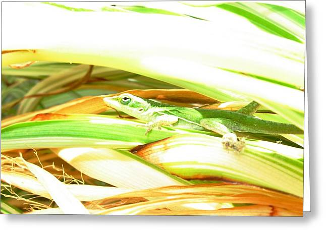 Greeting Card featuring the photograph Anole Sunning by Jeanne Kay Juhos