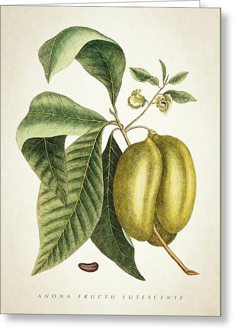 Anona Fructu Lutescente Botanical  Greeting Card