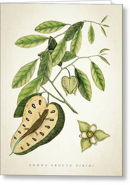 Anona Fructu Viridi Botanical Print Greeting Card