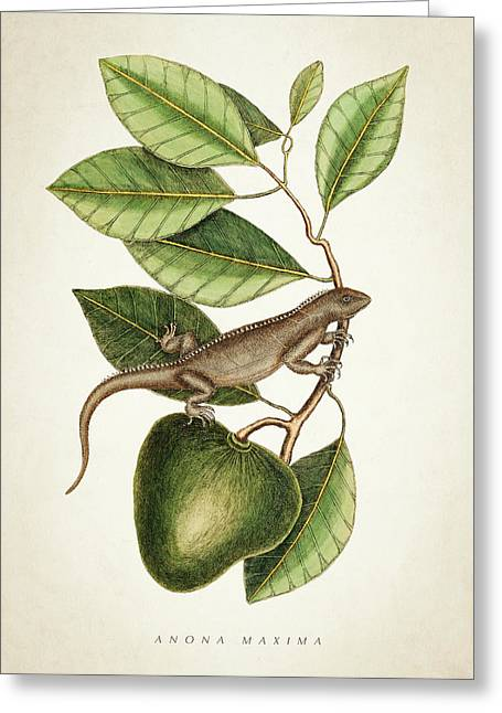 Anona Maxima Botanical  Greeting Card