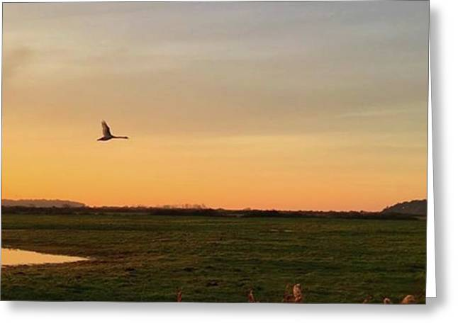 Another Iphone Shot Of The Swan Flying Greeting Card by John Edwards