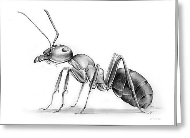 Ant Greeting Card by Greg Joens