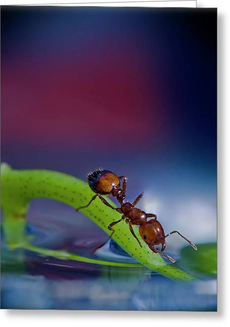 Ant In A Colorful World Greeting Card by Bob Rasulev