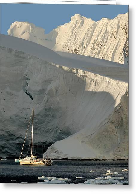 Antarctic Greeting Cards - Antarctic No. 7 Greeting Card by Joe Bonita