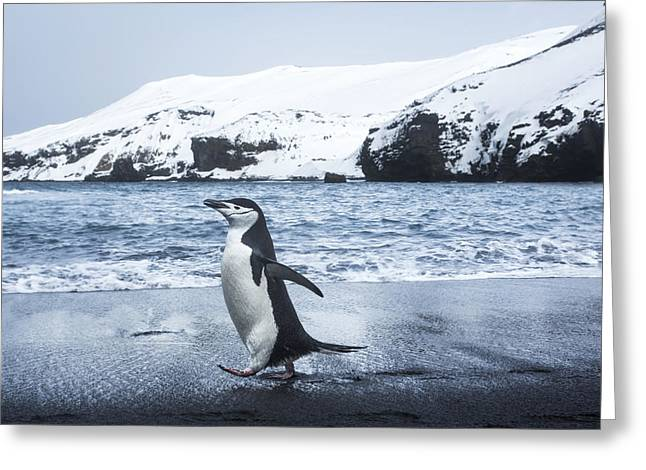 Antarctica, South Shetland Islands Greeting Card by Paul Souders