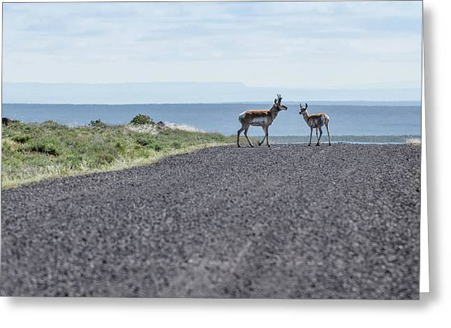 Antelope Crossing Greeting Card by Jean Noren