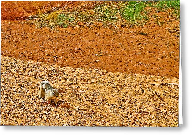Antelope Ground Squirrel Along Mouse's Tank Trail In Valley Of Fire State Park-nevada Greeting Card by Ruth Hager