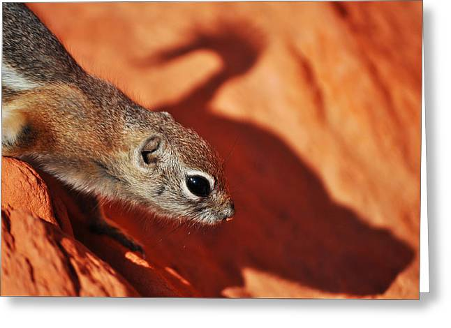 Antelope Ground Squirrel II Greeting Card by Kyle Hanson