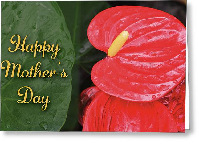 Antherium Mothers Day Card Greeting Card by Denise Bird