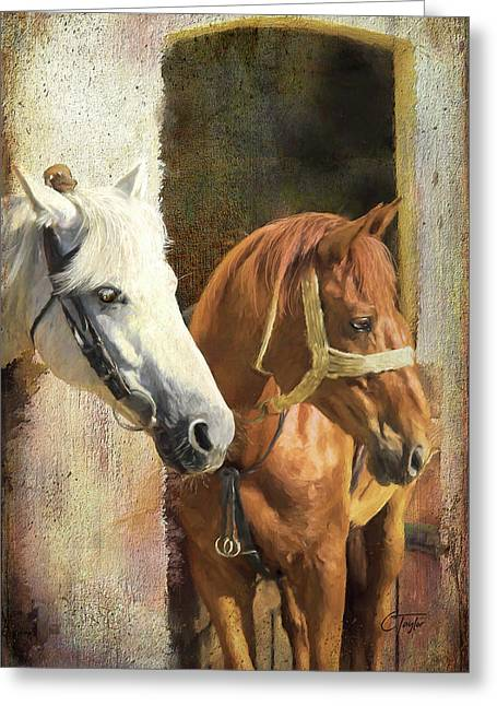 Anticipation Greeting Card by Colleen Taylor