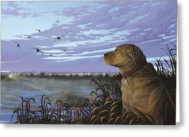 On Watch - Yellow Lab Greeting Card