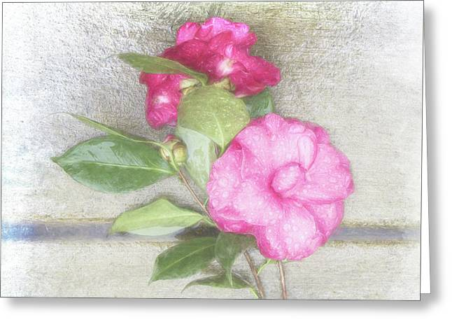 Antique Camellias Square Greeting Card by Terry Davis