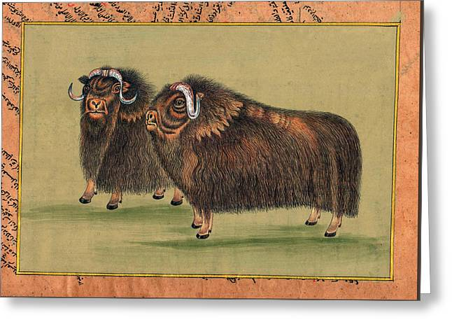 Antique-painting-artwork-artist-gallery-animal-himalayan-thar Painting. Greeting Card by M B Sharma