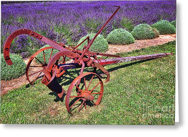 Antique Plow And Lavender Greeting Card