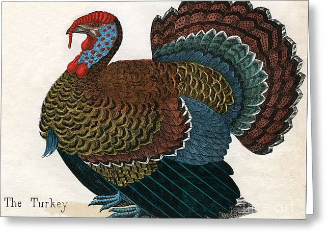 Antique Print Of A Turkey, 1859  Greeting Card