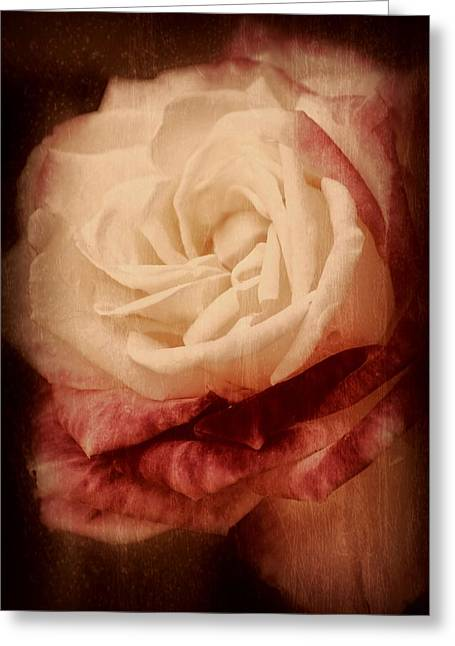Antique Rose - In Full Bloom Greeting Card