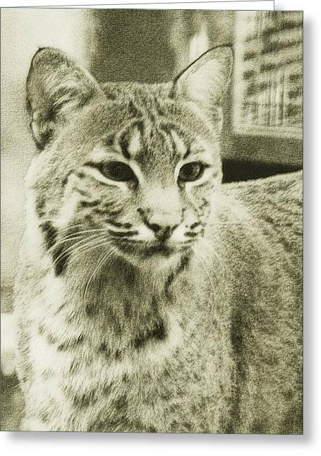 Antique Stipple Bobcat Greeting Card