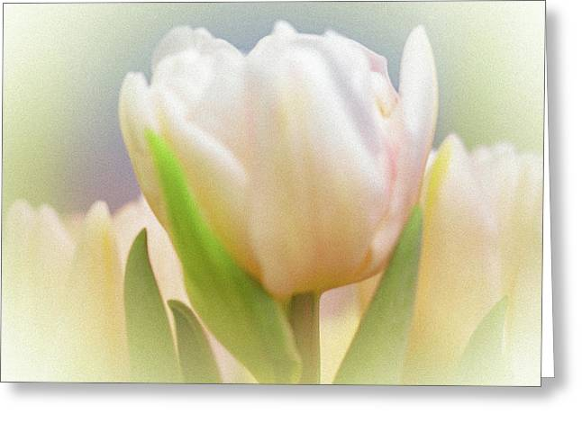 Antiqued Tulip Greeting Card by Mother Nature