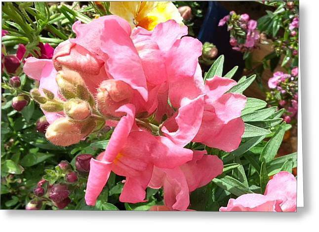 Antirrhinum - Snapdragon Greeting Card