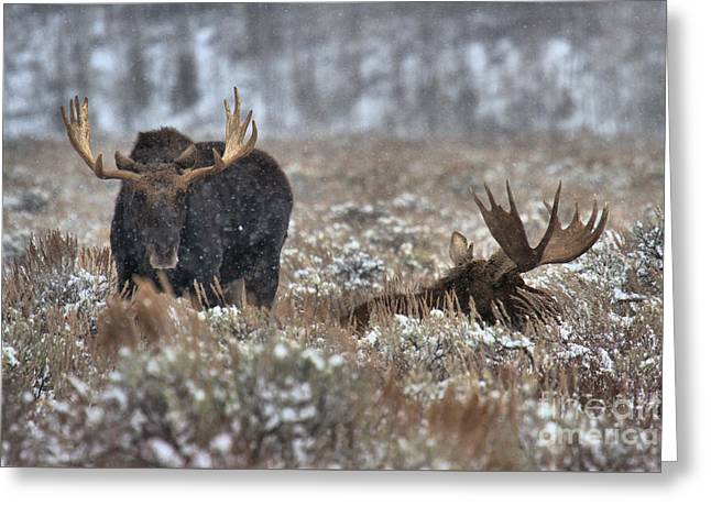 Antlers In The Brush Greeting Card by Adam Jewell