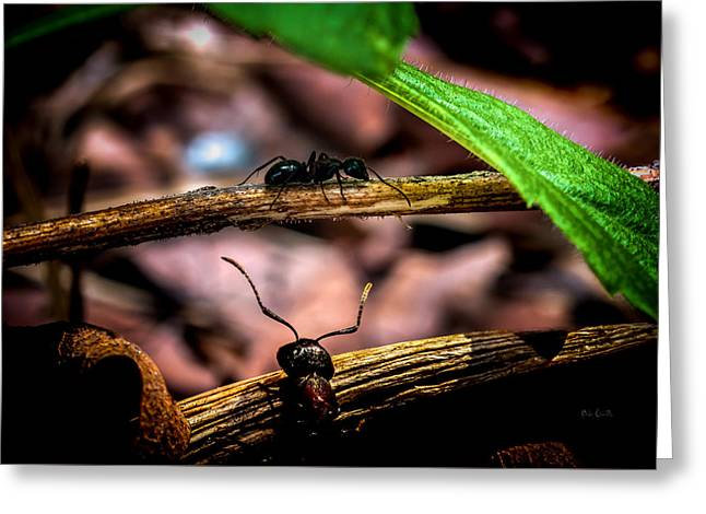 Ants Adventure Greeting Card by Bob Orsillo