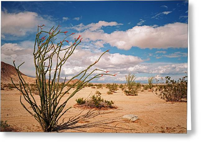 Anza Borrego Desert Greeting Card
