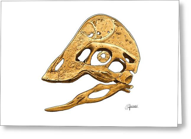 Anzu Wyliei Skull Greeting Card