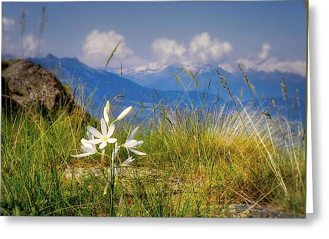 Aosta Flowers Greeting Card