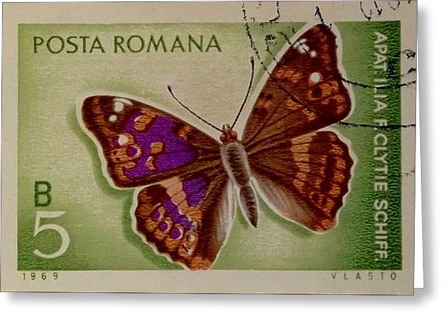 Apatur Ilia F Clytie Schiff Greeting Card