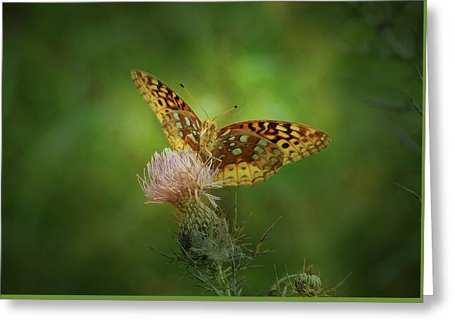 Greeting Card featuring the photograph Aphrodite Fritillary Butterfly by Sandy Keeton