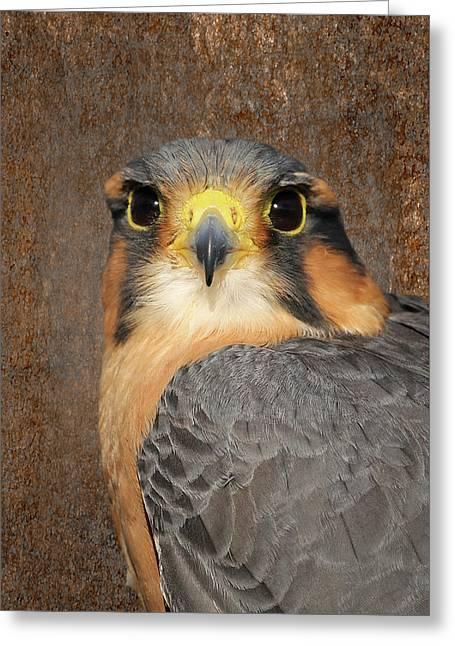 Aplomado Falcon Portrait Greeting Card