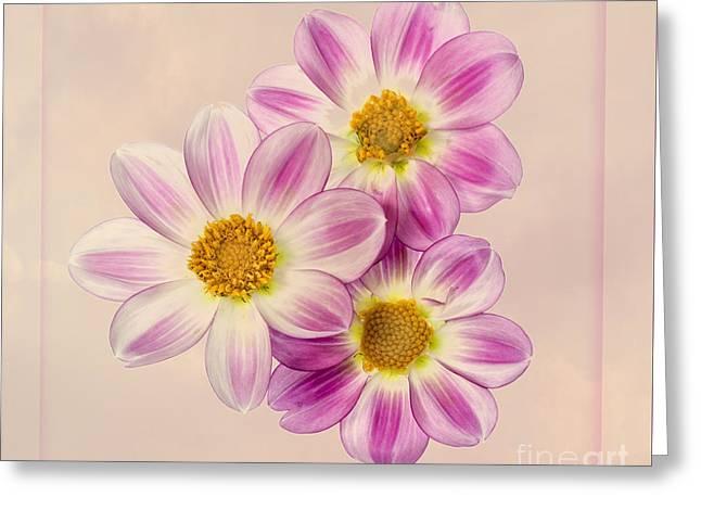 Apopa Sky Greeting Card